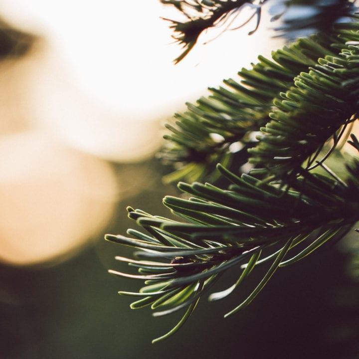 christmas pagan roots